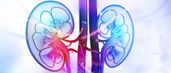 The kidneys clean blood by removing excess fluid, minerals, and wastes to make urine. (©iStock/HYWARDS)