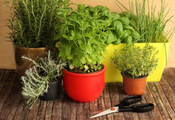 Potted plants on display