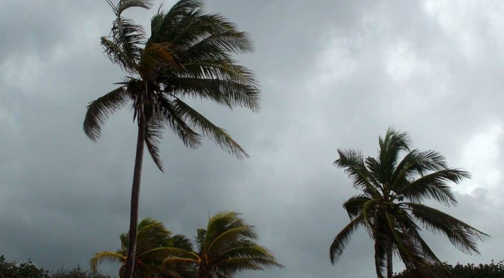 Palm trees being blown in a storm.