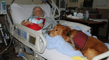 Vietnam Veteran Robert Brown recovers from surgery with his service dog Amy
