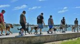 IMAGE: K9s For Warriors veterans walking with their service dogs