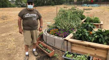 Man standing at raised vegetable beds and containers