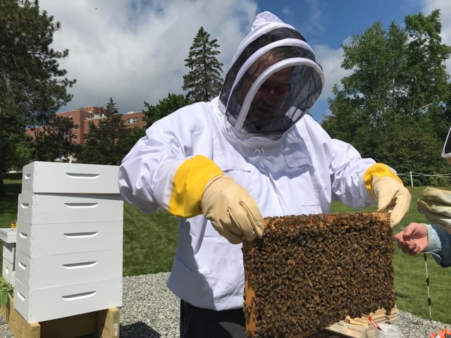 Veterans work with bees at Manchester VA Medical Center in 2019.