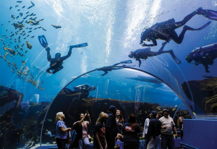 diver in large tank